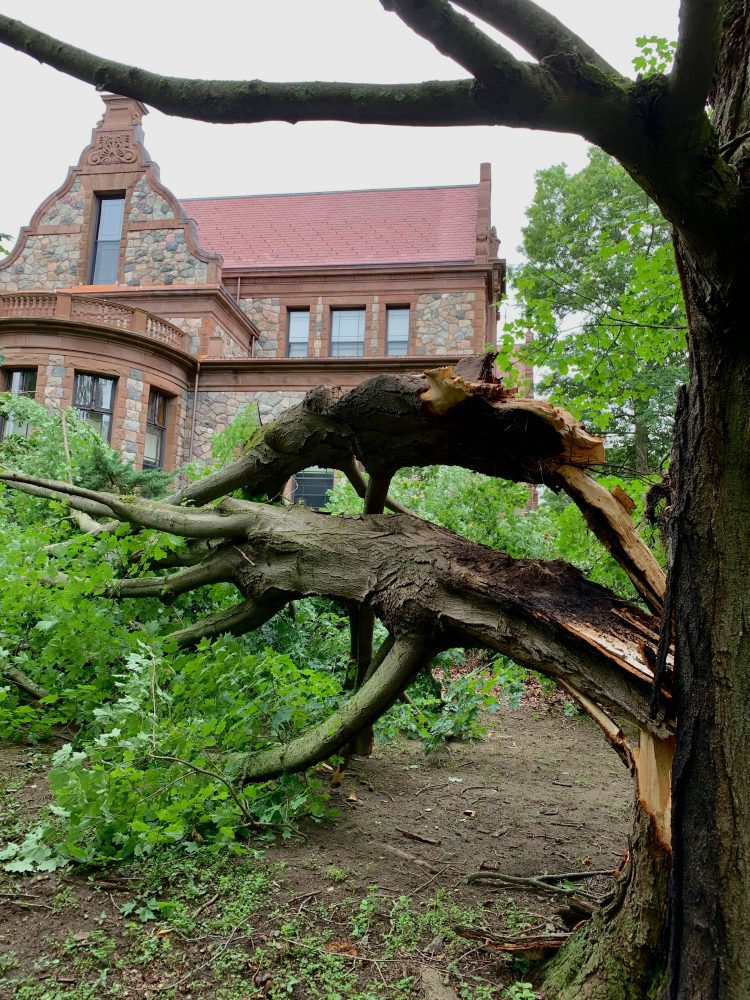 Wellesley Town Hall, damaged tree