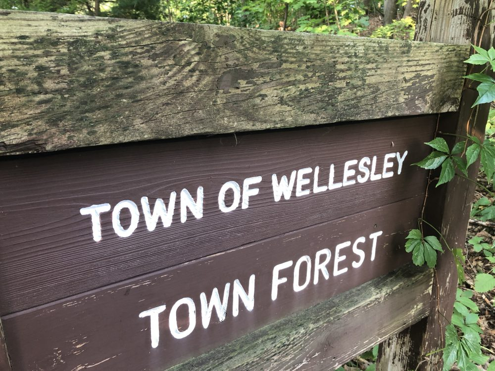 town of wellesley town forest