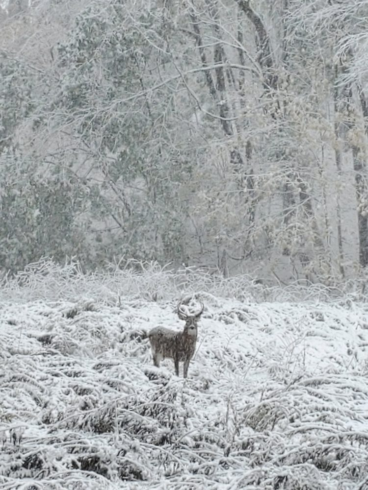 snow buck october