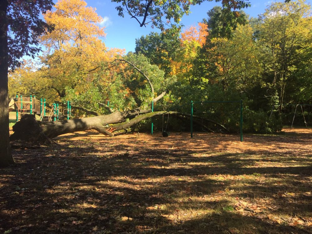 tree down at hunnewell elementary school