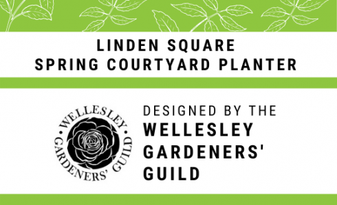 Linden Square, Wellesley